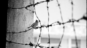 barbed-wire-bird
