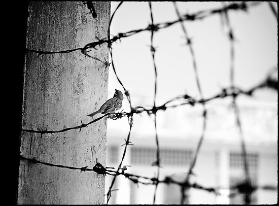 barbed-wire-bird