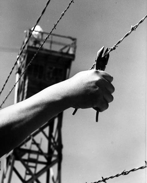 barbed wire hand_sm