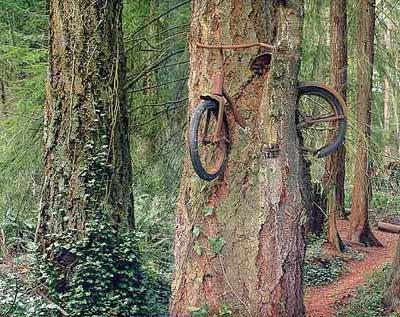 weird-tree-3