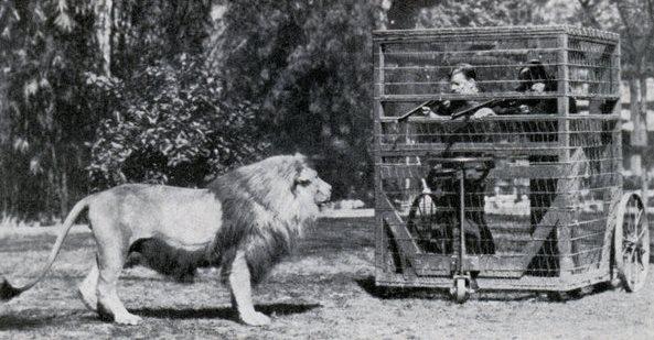 med_lion_cage