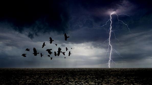birds-storm