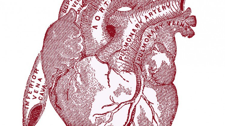 heart-vintageanatomy-graphicsfairy007red