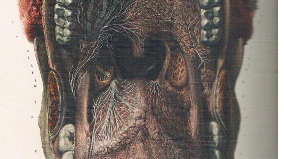 anatomy 001