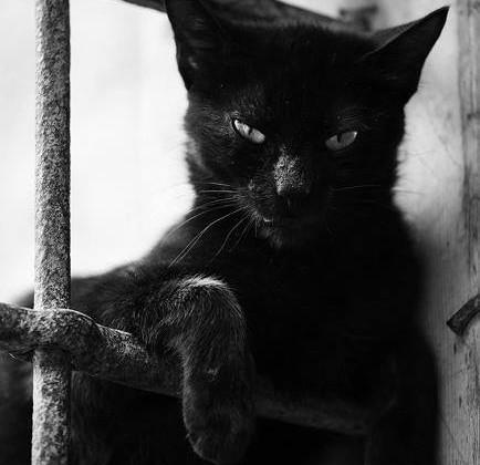 cat-434x420