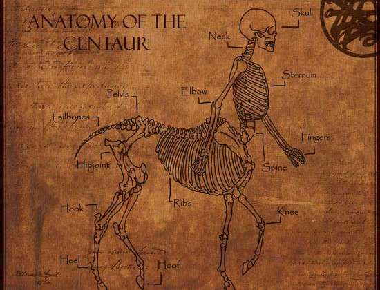 centaur-anatomy-550
