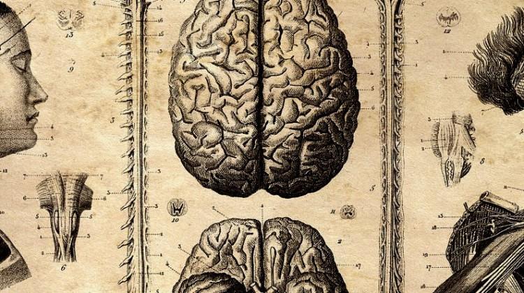 anatomical-diagram