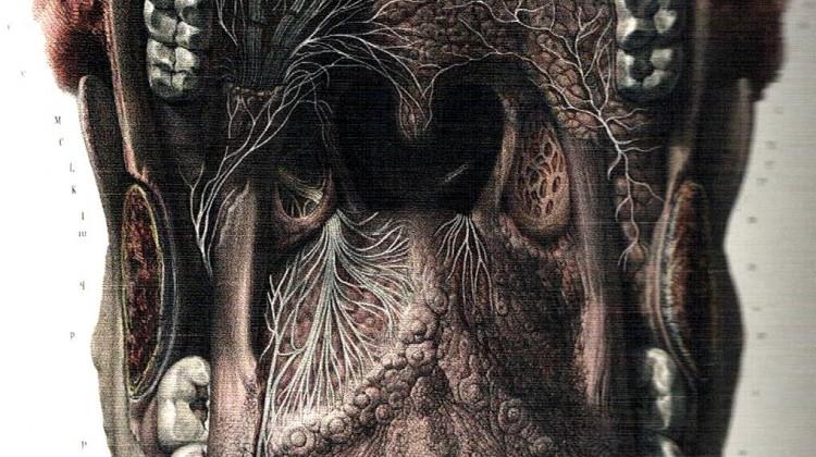 anatomy 001 - Copia
