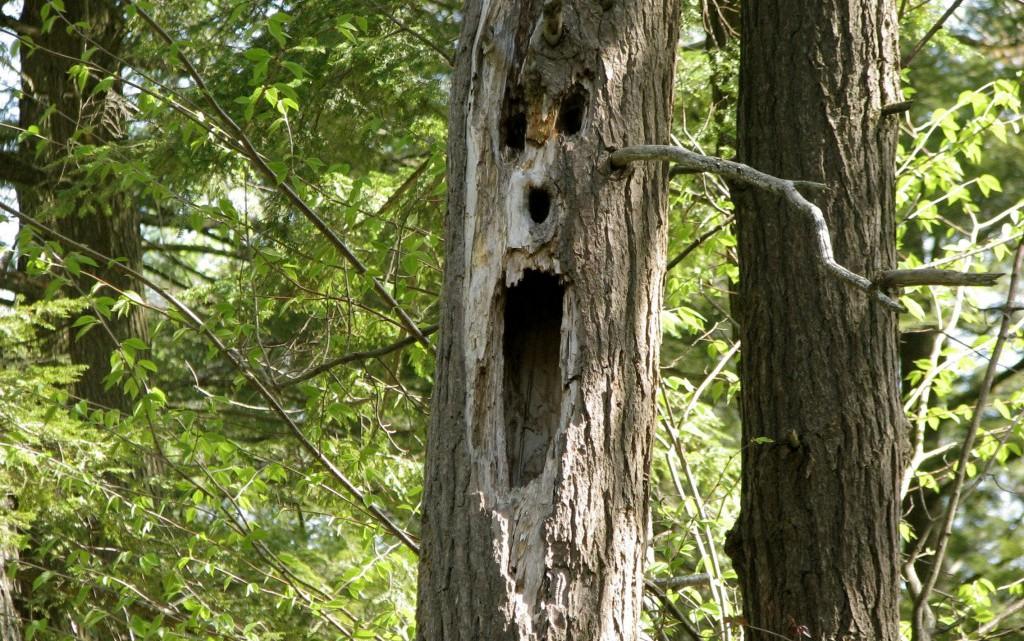 scary-tree-1024x768