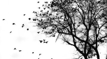 aves_arbol