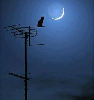 gatto su antenna