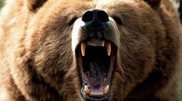 Grizzlyft