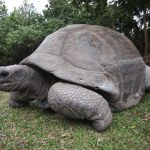 tartaruga-alle-seychelles